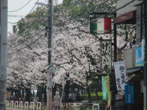 新松戸中央公園3