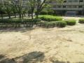 小鳥の来る公園